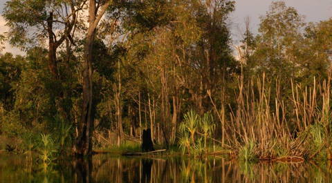 Peat swamp forest in Kalimantan, Indonesia (Photo: H. Joosten)